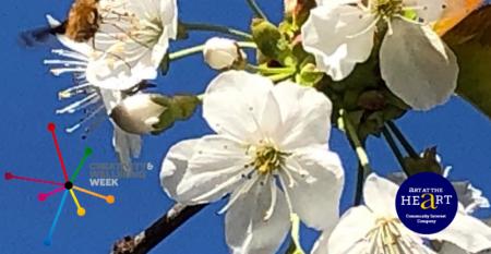 Photograph of cherry blossom